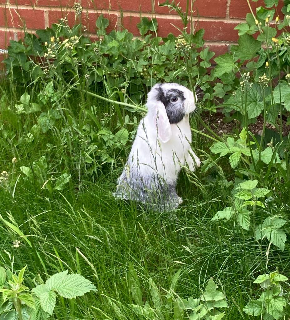 A bunny in the garden